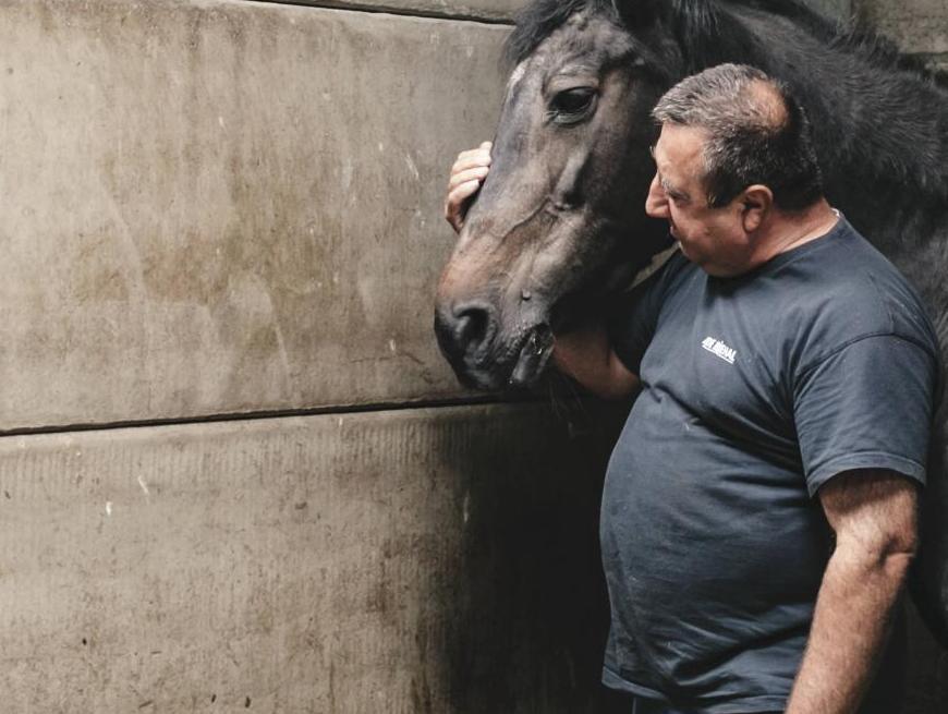 paardenstal breugelhoeve