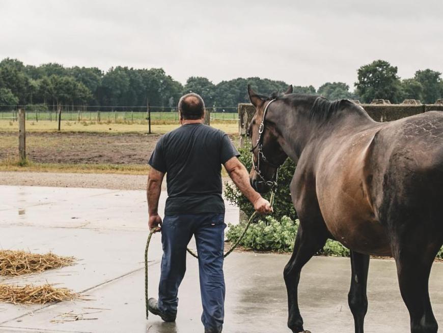 paard breugelhoeve
